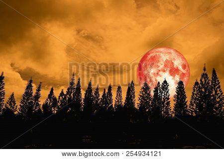 Full Red Moon Back Silhouette High Pine In Dark Red Orange Night Sky
