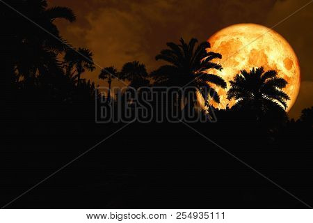 Blood Moon Back Silhouette In The Ancient Palm Night Sky