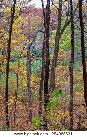Colorful Autumn Scenic Landscape In Minnesota With Trees And Woods