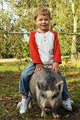 A preschool boy in his yard riding on the back of his pet pot-bellied pig. poster