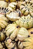 Lots of green white cucurbita pepo, delicious squash for microwave and oven poster