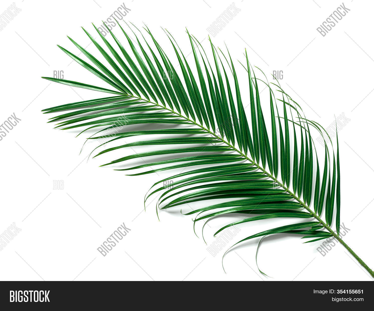 Palm Leaves Isolated Image Photo Free Trial Bigstock Search for more beautiful pictures and free images on picjumbo! bigstock