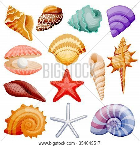 Seashells Collection. Vector Flat Cartoon Illustration. Summer Travel Design Elements, Isolated On W