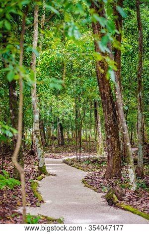 Cleaver Woods Park Trinidad Tropical Forest Park Gravel Footpath Peaceful Natural Calm Walk