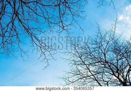 Blue Sky With Bough Of Tree. Beautiful Natural Of Sky And Tree Abstract Or Background.