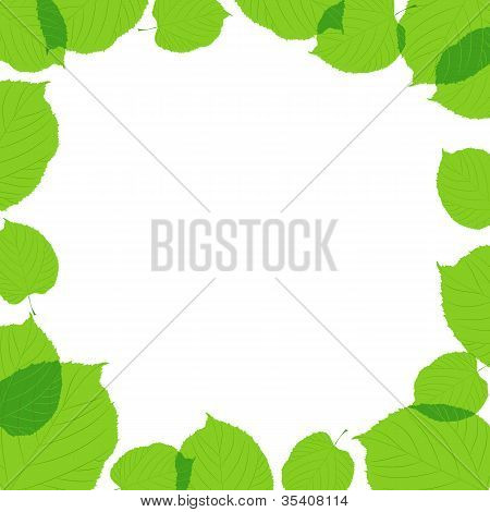 Green leaves frame on the white background