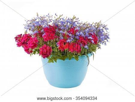 Hanging basket full of lobelia and red verbena.