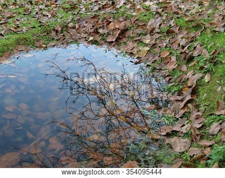 Small And Shallow Rainwater Drainage Pond In A Park, With Pebbles Visible Through Water, View From W