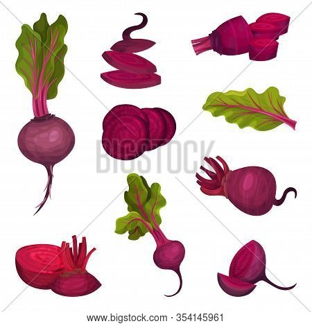 Beet Root With Green Top Leaves Cut And Whole Vector Set