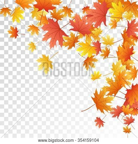 Maple Leaves Vector, Autumn Foliage On Transparent Background. Canadian Symbol Maple Red Yellow Gold