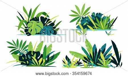 Decorative Compositions Of Different Jungle Plants On Ground, Group Of Green Plants Isolated, Dense