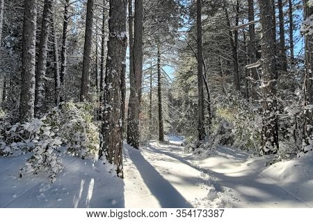 sunlight e long shadows in pine forest snow covered of Etna Park, Sicily