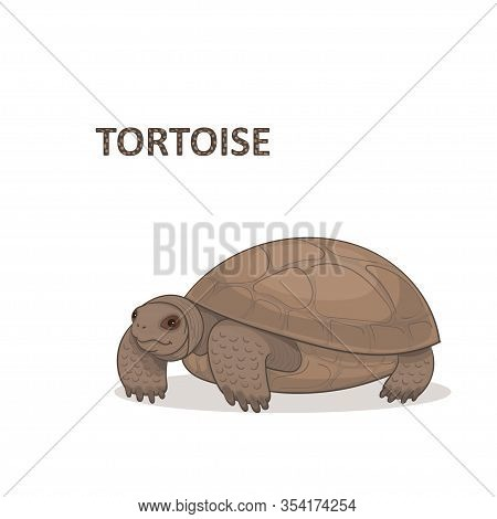 Vector Illustration, A Cartoon Brown Bid Tortoise, Isolated On A White Background.
