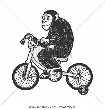 Circus Chimpanzee Monkey Rides A Bicycle Sketch Engraving Vector Illustration. T-shirt Apparel Print