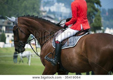 Horsewoman In Uniform