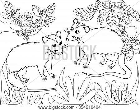 Possum Family. Children Coloring. Black Lines, White Background. Cartoon Vector