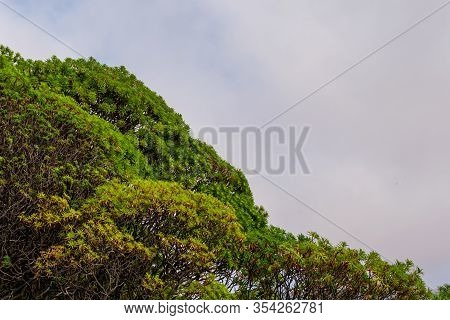 The Wide Angle Shot Of Exotic Spurge Growing In The Mediterranean Region With The Cloudy Sky In The