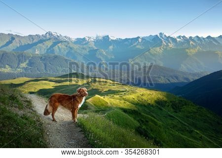 Hiking With A Dog. Mountain Landscape With Animal. A Trip To Georgia. Pet On A Background Of Beautif