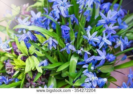 Blue Daisy Flower. Flower In Garden At Sunny Summer Or Spring Day. Flower For Postcard Beauty Decora