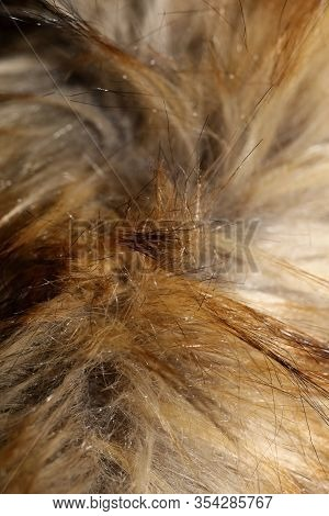 Artificial Brown Jacket Hairs Macro Background Stock Photography High Quality