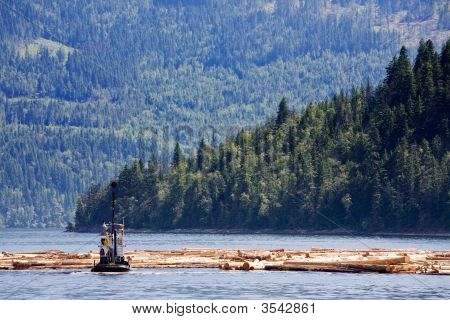 Coastal Logging