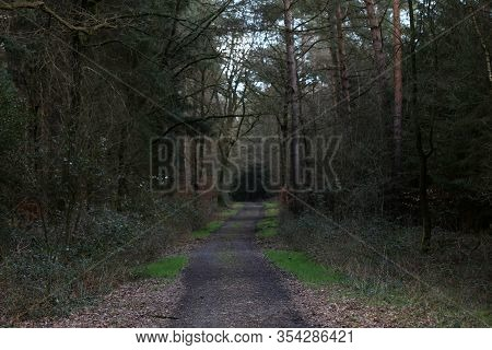 Road In German Forest Background Stock Photography High Quality