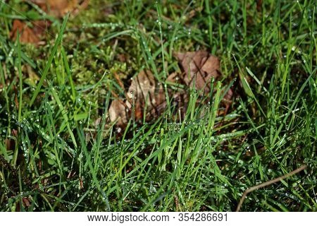 Grass Leaves Macro Background Stock Photography High Quality