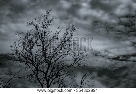 Silhouette Dead Tree On Dark Dramatic Sky And White Clouds Background For Death And Peace. Halloween