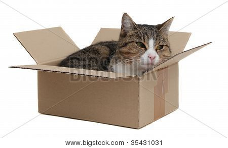 snoopy cat in removal box on white poster