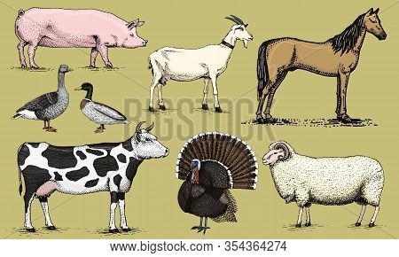 Farm Animals. Pig Goat Horse Sheep Cattle Cow Turkey Goose And Duck. Set Of Domesticated Animals. Ha
