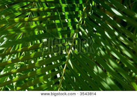 A palm fern collects sunlight in a carribean jungle. poster