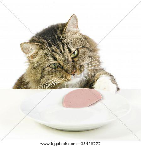 Cat Steals Slice Of Sausage