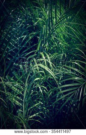 Dark Green Palm Leaves Background. Natural Botanical Texture.