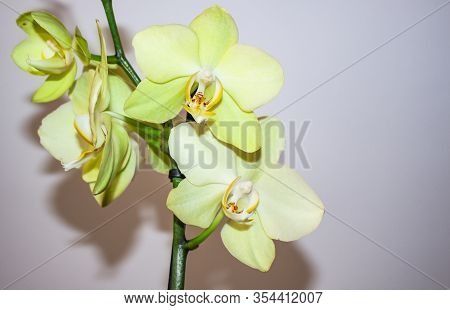 Orchid Flower In The Garden Of Orchids In The Winter Or Spring Day. Orchid Flower For Postcard Beaut