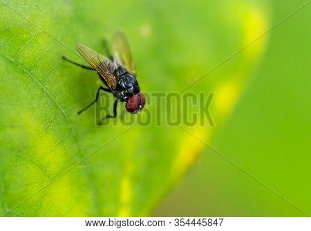 Macro Asia Fly