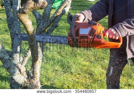 Lumberjack Cutting Branch With A Chain Saw For Trimming A Tree