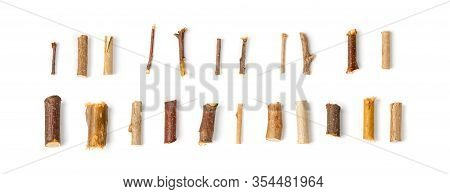 Set Of Dry Willow Branches, Bough And Twigs Of Deciduous Trees