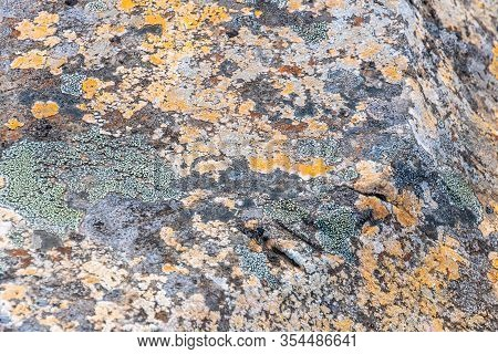 Plait And Lichens In Iceland Growing In Icy Climate On Big Rock