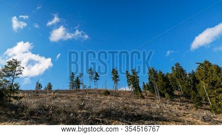 Pine Wood Stumps And Trees In Romania, The Carpathian Mountains On A Vibrant Sunny Spring Day, Conce
