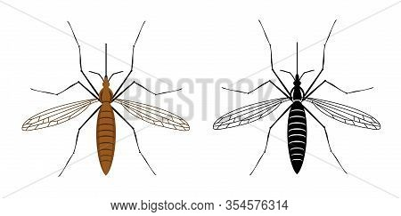 Colorful And Black Silhouette Mosquito Isolated On White Background. Illustration Of Insect. Mosquit