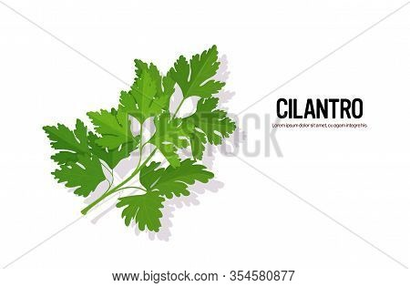 Realistic Cilantro Tasty Fresh Herb Green Leaves Healthy Food Concept Horizontal Vector Illustration