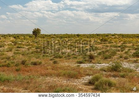 Lonely Tree In The Steppe Of Kazakhstan, Shrub And Grass In The Steppe Near The Syr Darya River