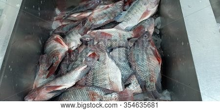 Fresh Mediterranean Fish In Ice Containers At The Market.