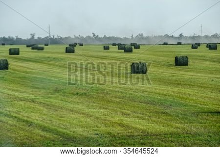 Field With Bales Of Hay. Preparing Hay For Feeding Animals. Newly Beveled Hay In Bales On The Field.