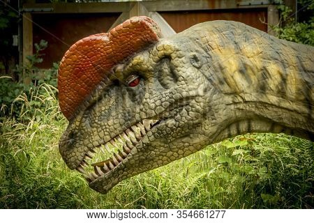 Giveskud, Denmark - 16 Juli 2019: Dilophosaurus Has Been Named For The Two Crests On The Top Of Its
