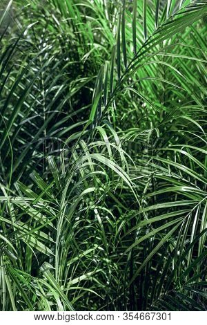 Bright Green Palm Leaves Background. Natural Botanical Texture.