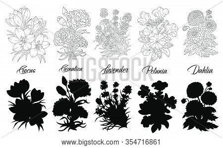 Set Of Black And White Outline Flowers - Crocus, Carnation, Lavender, Petunia, Dahlia. Vector Botani