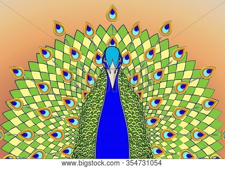 Peacock With Flowing Tail Colorful Cartoon Drawing, Graphic Print. Beautiful Blue Green Bird With Bi