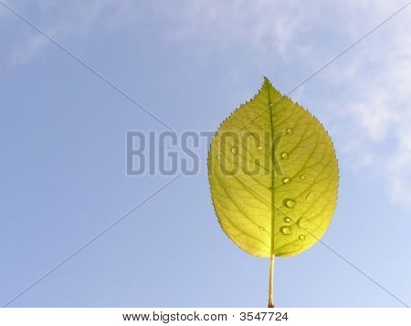 Leaf With Droplets Against The Sky