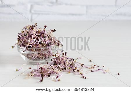 Sprouts Of Red Cabbage In Glass Bowl On White Wooden Table. Sprouted Seeds. Detox. Healthy Eating Co
